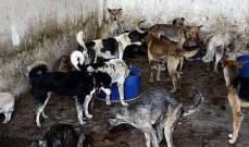 ماليزيا توقف حملة لقتل الكلاب الضالة