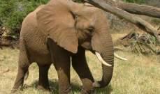 اتفاق بين البشر والأفيال البرية.. للتقليل من الصدامات