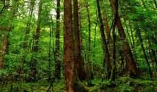 الصين تزرع غابات جديدة لتحسين البيئة