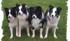 الكلاب تفهم المزاج من خلال تعابير الوجه والصوت