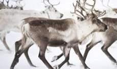 الحيوانات تهرب من عواميد التوتر العالي في النروج