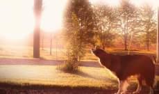 كلاب تقوم بحركات بهلوانية.. بالفيديو