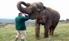 اقتلاع ضرس فيل بطريقة مميزة ..بالصور