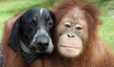 عيون القردة والكلاب تحوي بوصلة طبيعية