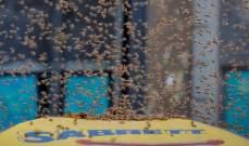 النحل.. في مشهد لا يخلو من التشويق وسط نيويورك