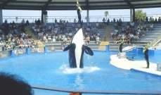 """منظمة """"بيتا"""" ترفع دعوى قضائية لتحرير الحوت لوليتا"""