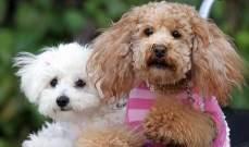 تربية الكلاب مفيدة وهذه علاقتها بالوقاية من الأمراض