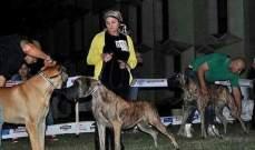 """بالصور.. أول اوتيل في مصر لاستجمام """"الكلاب"""""""