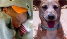 في حادث مفجع كلب يقتل طفلاً
