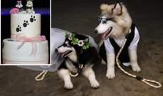 حفل زفاف لكلبين في اندونيسيا !