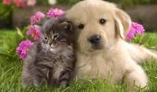 من يملك كلباً أكثر سعادة ممن يملك قطاً