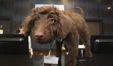 بالصور- فندق في لندن يوظف كلباً لاستقبال الزبائن !