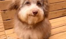 كلب يثير الحيرة بملامح وجه بشري.. بالصور