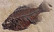 الحيوانات سبب الانقراض الجماعي الأول