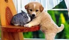 قانون فرنسي يقضي بقدرة الحيوانات على ابداء المشاعر !