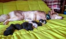كلبة تنقذ 7 قطط وتصبح اما لها