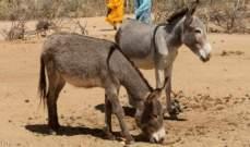 سجن ثمانية حمير اربعة ايام في الهند
