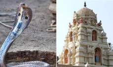 """هندي يتزوج """"كوبرا"""" بحضور 15 ألف مدعو"""