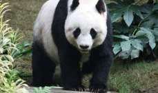 إندونيسيا تستقبل الباندا من الصين