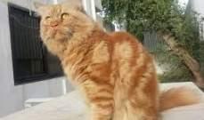 """""""غارفيلد"""" القط الأكبر سناً في أوروبا 23 عاماً..بالفيديو"""