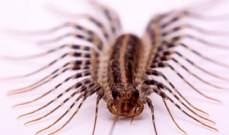 معلومات مهمة عن حشرة