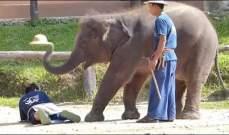 هل تلحق الفيلة بالديناصورات؟!