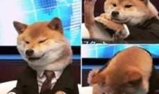 بالفيديو.. كلب في اليابان ينال شهرة عالمية لإذاعته نشرة الاخبار