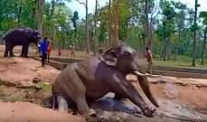 فيل يقتل طفلة ويشوّه اخويها