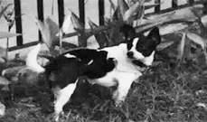"""امرأة صينية عرضت منزلها كـ""""مكافأة"""" لمن يعثر على كلبها"""