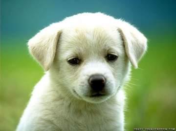 جومانا وهبي تكشف عن تفسير رؤية كلب في الحلم