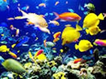 بالفيديو- هذا ما فعلته آلاف الأسماك الجائعة عند وضع الطعام لها