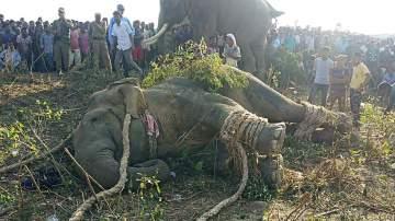 """إلقاء القبض على الفيل """"بن لادن""""!"""