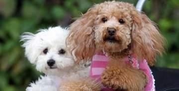 ضريبة على تربية الكلاب في هذه المدينة الإسبانية