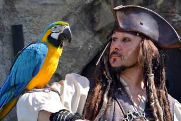 الببغاء.. الحيوان الناطق الوحيد الذي اشتهر في أفلام القراصنة