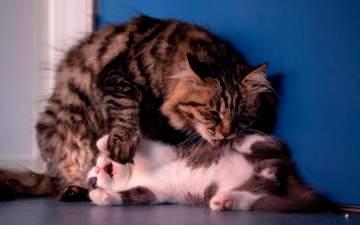 بعد إستنساخ قطة في الصين .. إليكم أشهر حالات إستنساخ الحيوانات