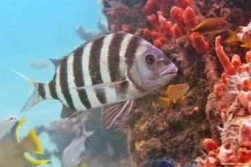 رصد سمكة بوجه إنسان في هذه الدولة-بالفيديو