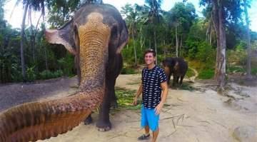 """بالصور- فيل انتزع الهاتف من أحد السياح ليلتقط معه """"سيلفي"""""""