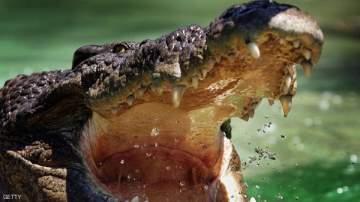 تمساح مجبر على شرب الكحول !
