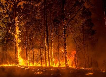 هذا الحيوان تحدى حرائق غابات أستراليا ولم يتأثّر!
