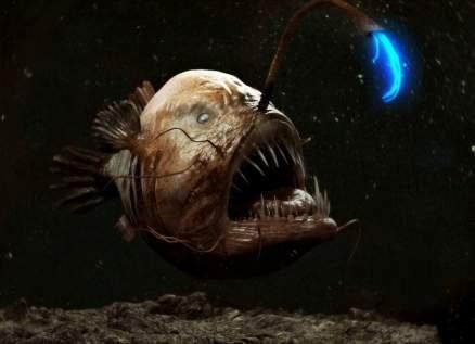 اكتشاف سمكة مخيفة على شاطئ كاليفورنيا-بالصورة