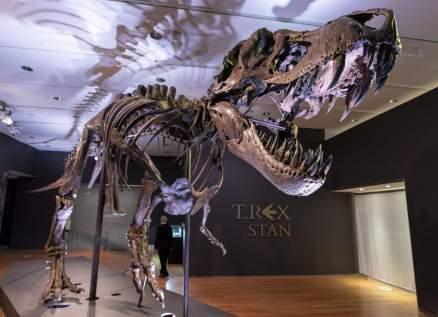 ديناصور للبيع بسعر خيالي!