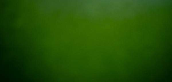جومانا وهبي تكشف عن رمز اللون الأخضر