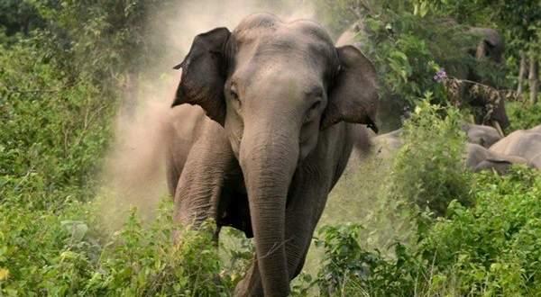 """حاول إلتقاط سيلفي مع """"فيل"""" فحدثت المفاجأة..بالفيديو"""