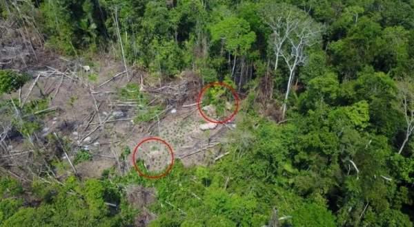 """العثور على قبيلة """"منعزلة"""" في البرازيل.. بالفيديو"""