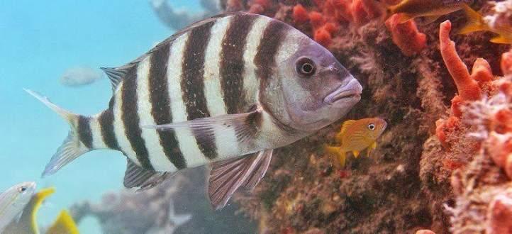 رصد سمكة بوجه إنسان في هذه الدولة- بالفيديو