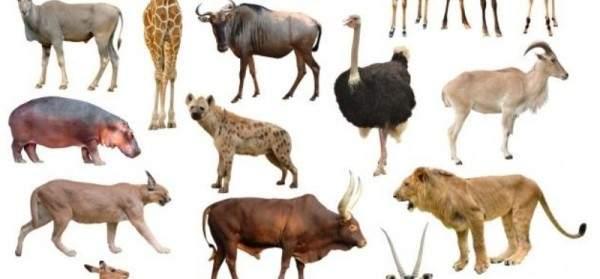 حيوانان مهددان بالإنقراض بسبب طول مدة ممارسة الجنس