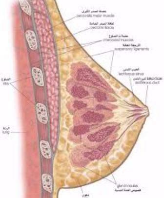 إذا كنت مدمنا على مص حلمات الثدي فاحترس واكتشف الضرر