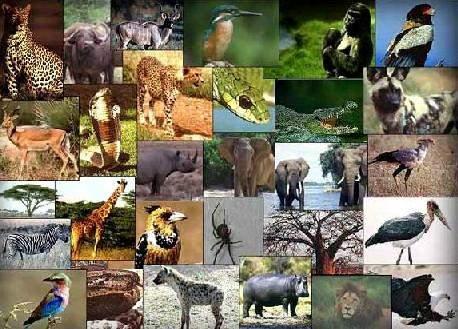 أميركي في الـ16 يسعى لالتقاط صور مع كل حيوانات العالم