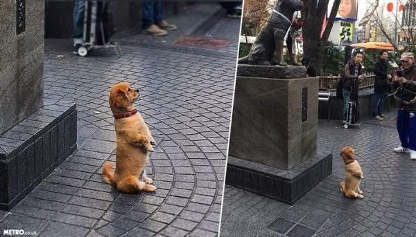 كلب يتحول لتمثال..بالصور