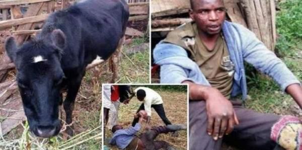 5a6f839ec6792 رجل يفضّل إغتصاب البقر على ممارسة الجنس مع النساء لسبب غريب!